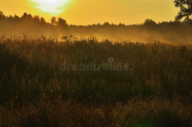 Step pod ranku światłem słonecznym w mgle, zdjęcia royalty free