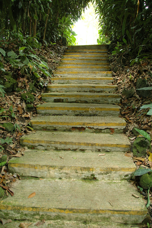 Step into the Unknown. A fleet of stairs at botanic garden royalty free stock photo