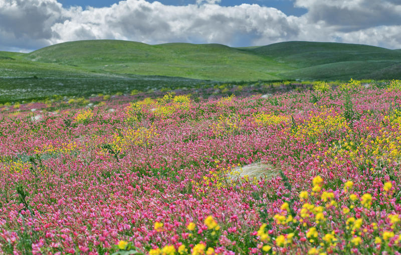 Steppa del fiore. fotografia stock