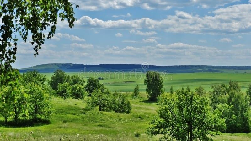 steppe arkivfoto