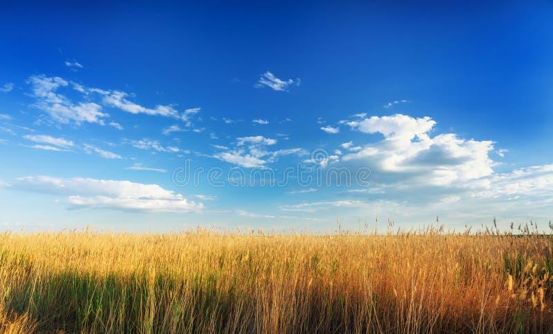 Steppe de l'Astrakan sous le beau ciel Panorama de nature près de lac de sel Baskunchak images libres de droits
