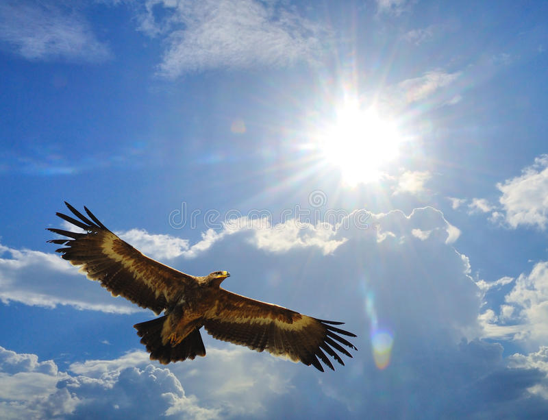 Steppe Eagle. Eagles ( Steppe Eagle ) flying in the sky Backdrop royalty free stock image