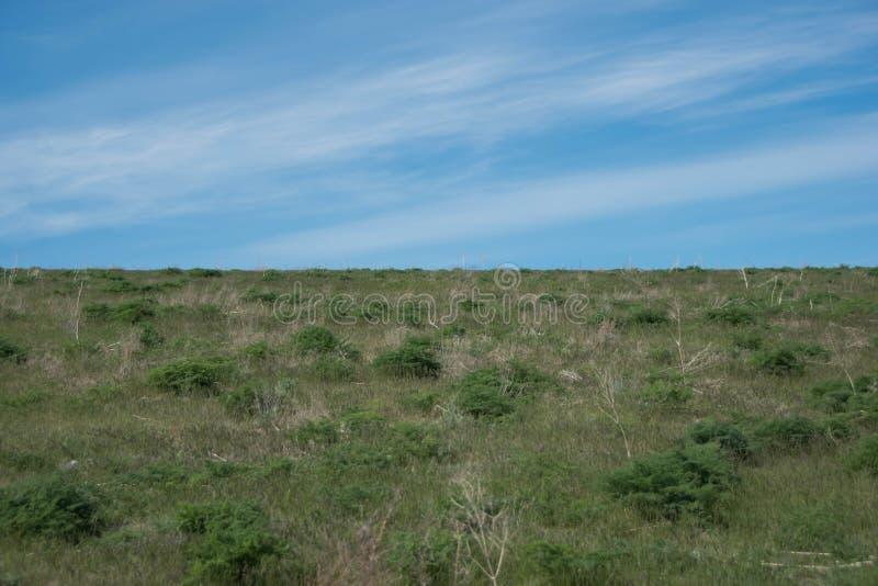 Steppe en ressort en retard contre le contexte du ciel de holo-ciel photo libre de droits