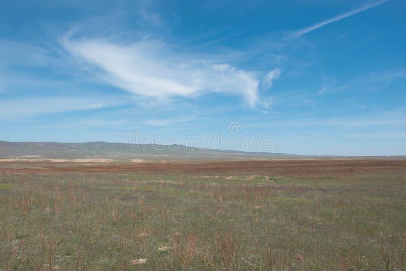 Steppe en ressort en retard contre le contexte du ciel de holo-ciel photographie stock