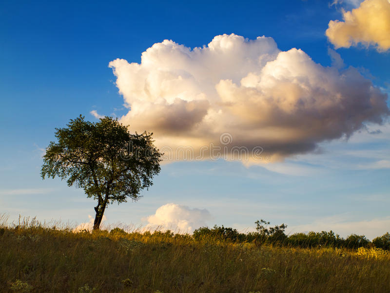 Steppe evening landscape with trees and clouds. Steppe landscape of Ukrainian Donbass stock photo