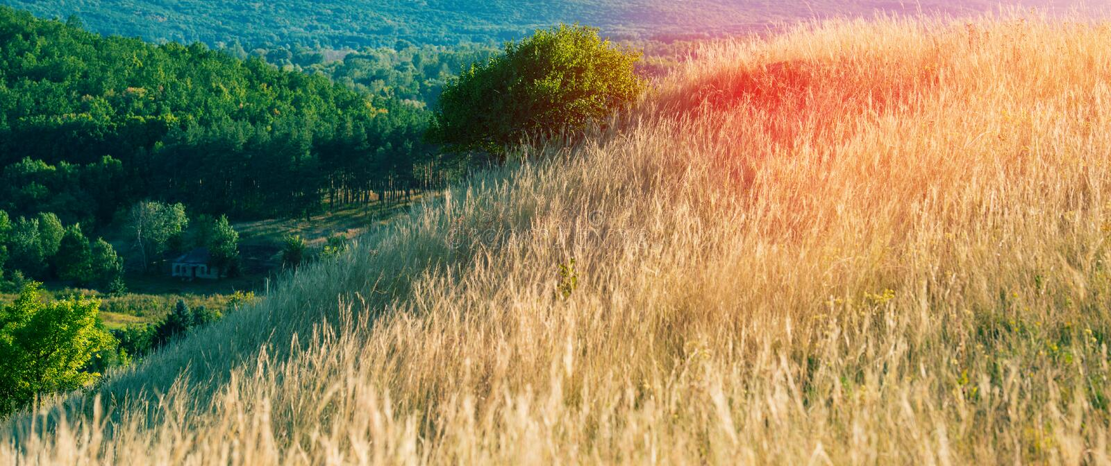 Steppe and forest stock image