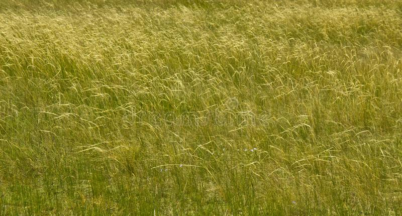 Steppe grass forms a filigree pattern at the slightest breath of wind.  stock image