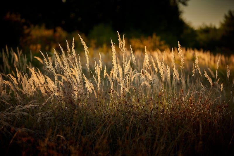 Steppe Grass i solupplyst ljus royaltyfria foton