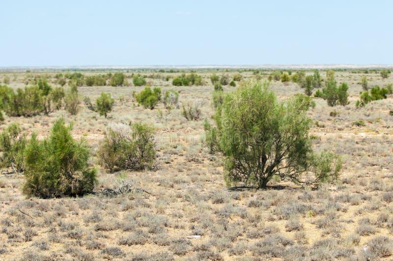 steppe Humidité déboisée et pauvre et secteur généralement plat avec le gra photo stock