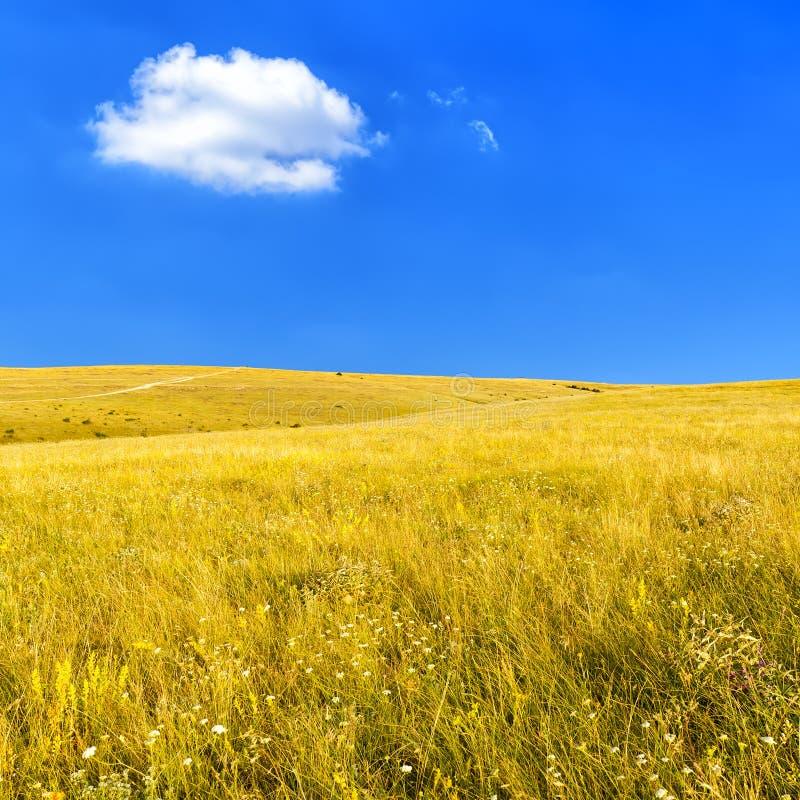 Steppe mit trockenem Gras lizenzfreies stockbild