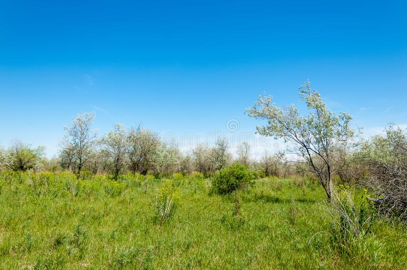 Steppe, prairie, veld, veldt. A large area of flat unforested grassland in southeastern Europe or Siberia stock photo