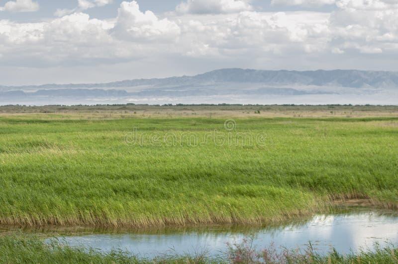 Steppe, prairie, veld, veldt. stock images