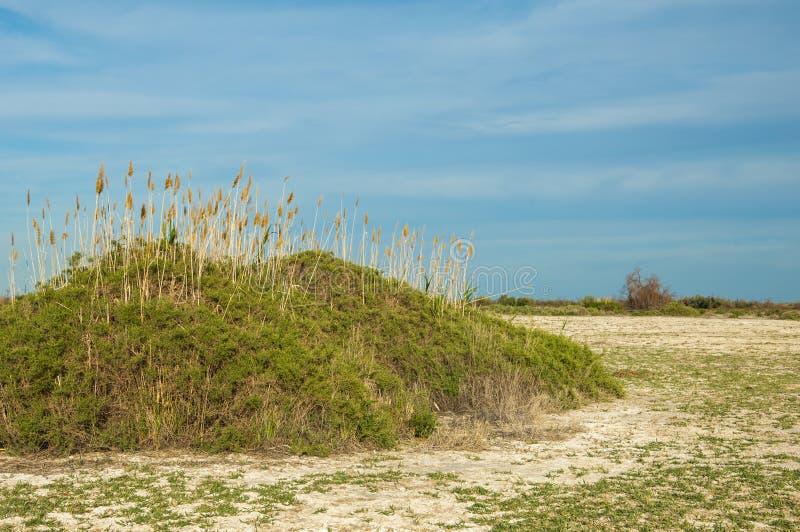 steppe Végétation saline de buisson Humidité et gène déboisés et pauvres photos stock
