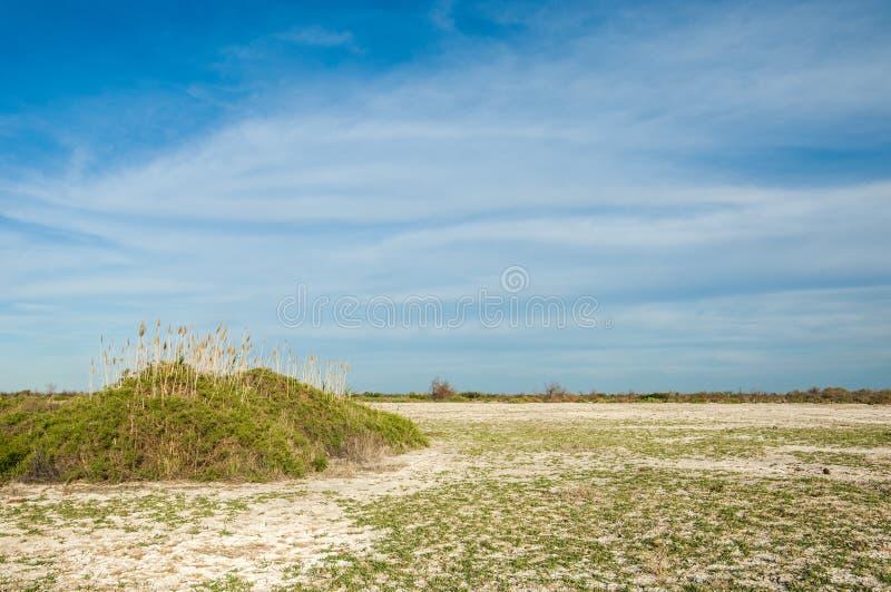 steppe Végétation saline de buisson Humidité et gène déboisés et pauvres photographie stock