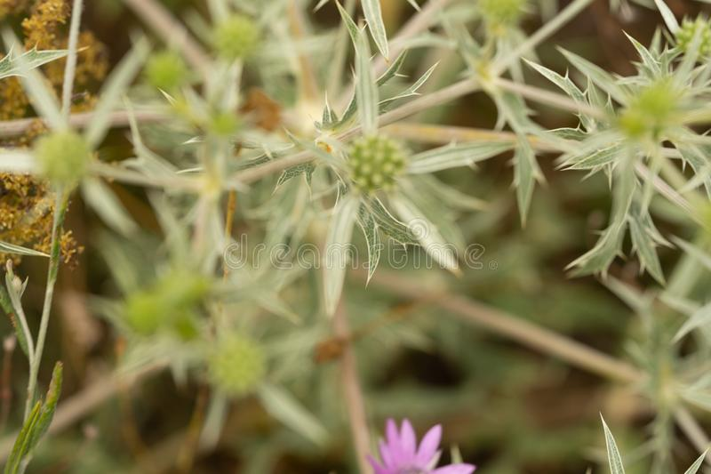 Steppe wildflowers. Selective focus. Early morning. Flowers. Steppe wildflowers. Selective focus Early morning, close, closeup, bright, natural, summer, fresh stock photos