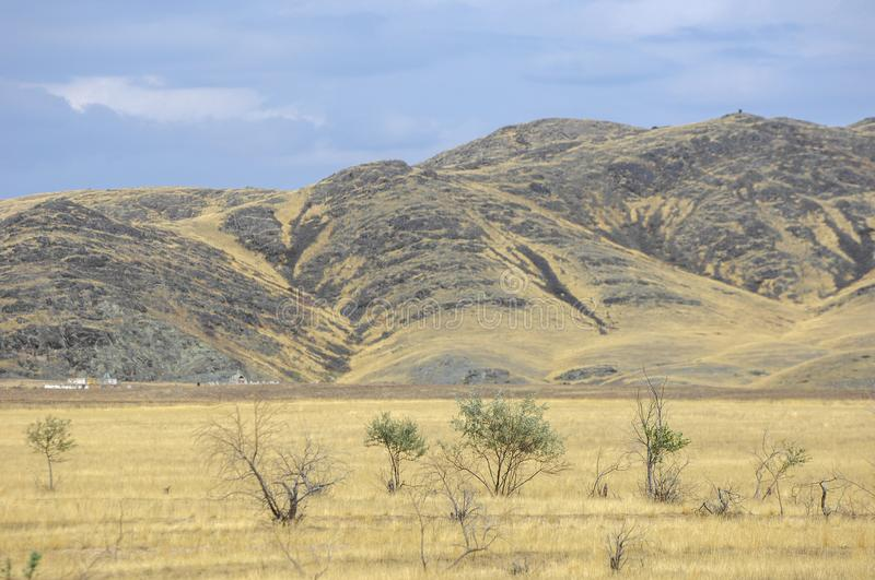 The steppe is woodless, poor in moisture and usually flat with g. Rassy vegetation in the dry climate zone. prairie, veld, veldt stock photos