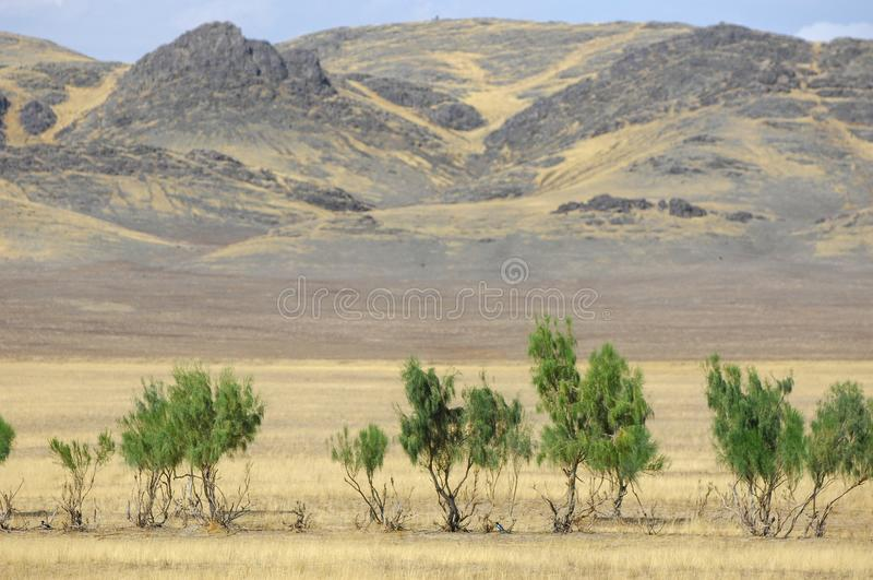 The steppe is woodless, poor in moisture and usually flat with g. Rassy vegetation in the dry climate zone. prairie, veld, veldt royalty free stock photography