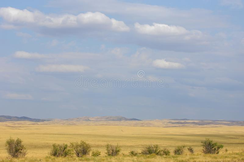 The steppe is woodless, poor in moisture and usually flat with g. Rassy vegetation in the dry climate zone. prairie, veld, veldt stock images