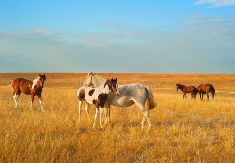 Steppepaarden stock foto