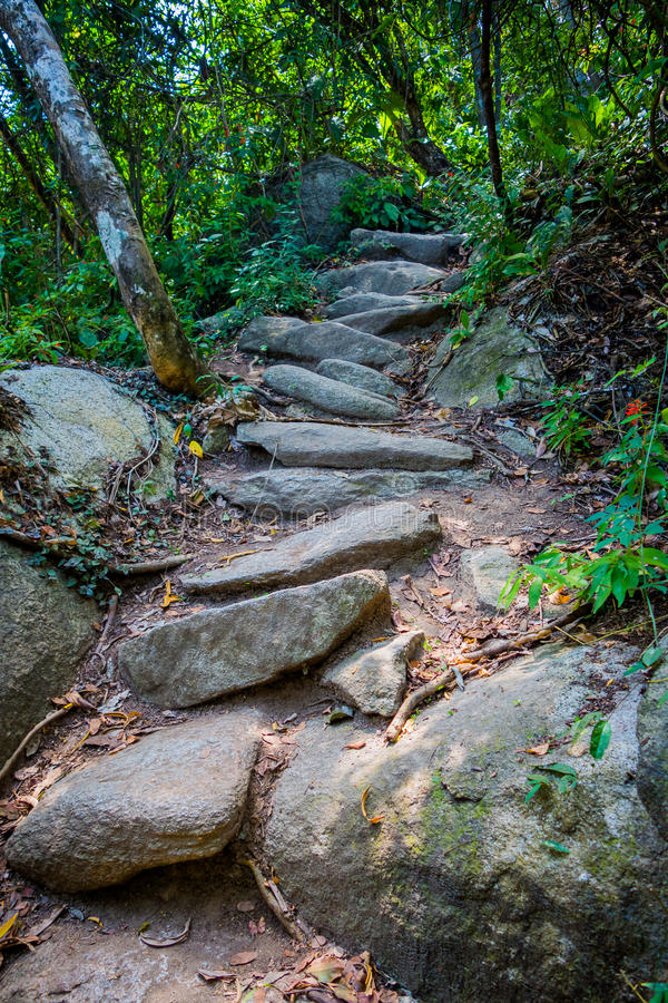 Steps accessing village of Kogi people, indigenous. Steps accessing a village of Kogi people, indigenous ethnic group, in Tayrona National Park, Santa Marta royalty free stock photo