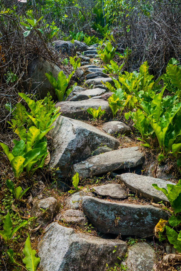 Steps accessing village of Kogi people, indigenous. Steps accessing a village of Kogi people, indigenous ethnic group, in Tayrona National Park, Santa Marta royalty free stock photos