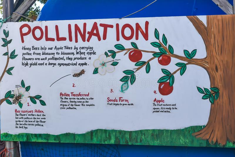 Steps of Apple Tree Pollination Diagram royalty free stock image