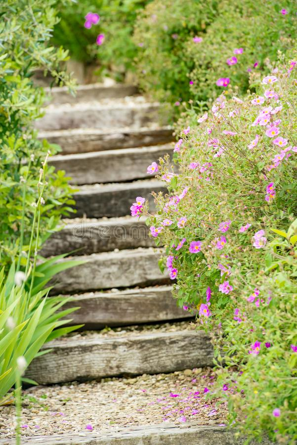 Steps in flowering garden in Tuscany royalty free stock image