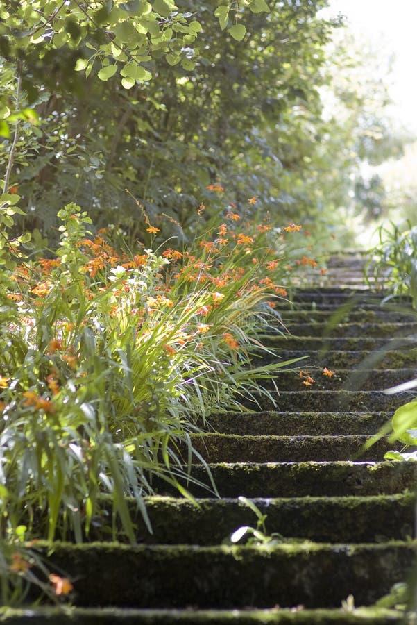 Steps garden stock images