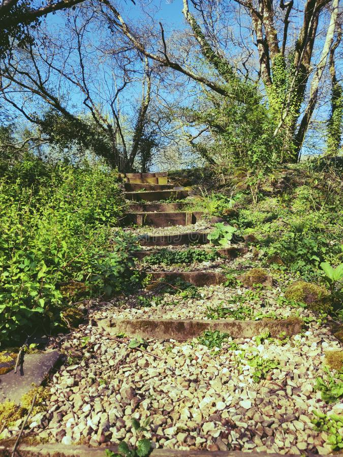 Steps in a garden stock images
