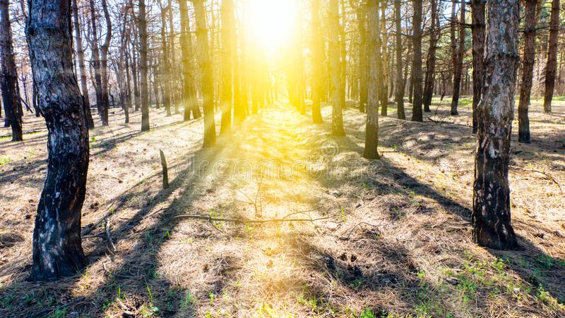 Steps Leading Sun Way God Bright Light Heaven Religious . royalty free stock photo