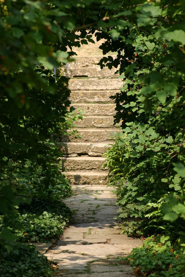 Steps in garden. Steps leading up from paved path in garden with trees either side framing the path and forming a tunnel stock image