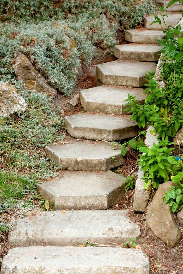Download Steps up stock image. Image of green, park, jungle, curve - 26538201