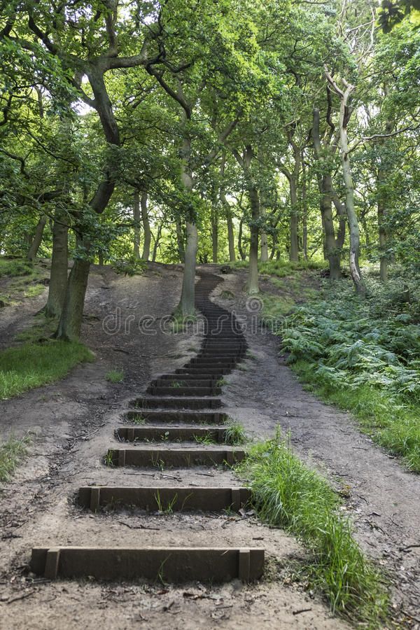 Steps into the woods. Flight of winding steps leading up deeper into woodland royalty free stock photography