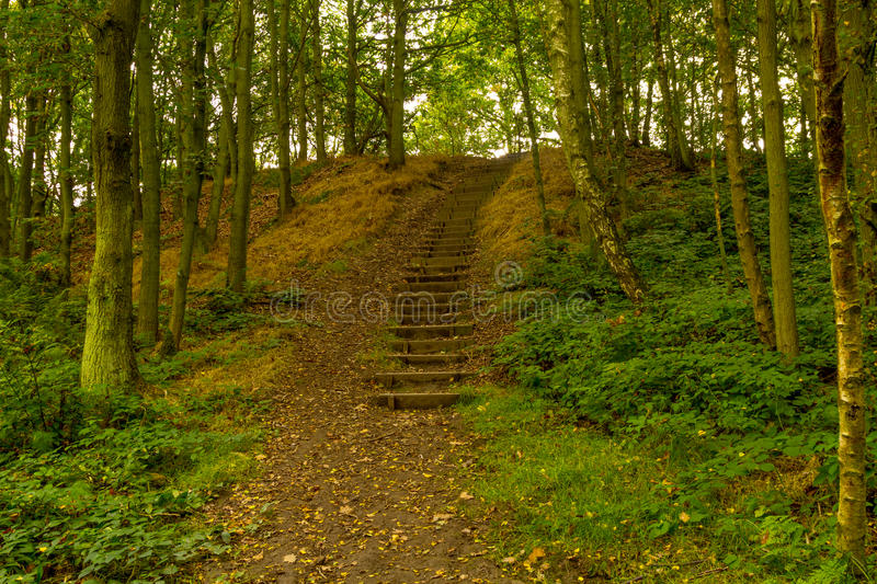 Steps in the woods stock photography