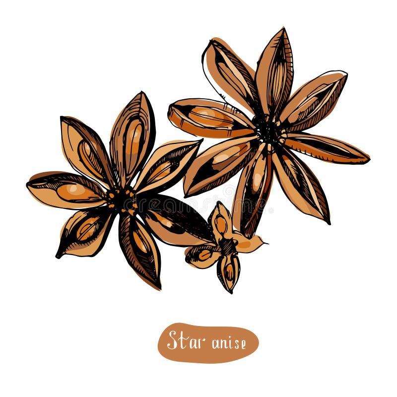 Steranijsplant of badian hand getrokken schets Gegraveerd stijlkruid en aromavoorwerp Het koken en aromatherapy ingrediënt royalty-vrije illustratie