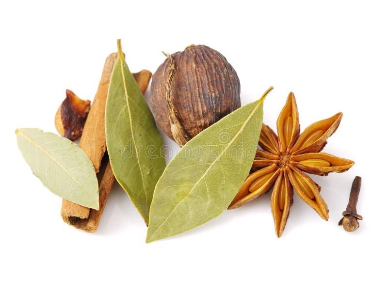 Steranijsplant, pijpjes kaneel, de zwarte laurier ¼ Œbay van kardemompeulen ï stock afbeeldingen