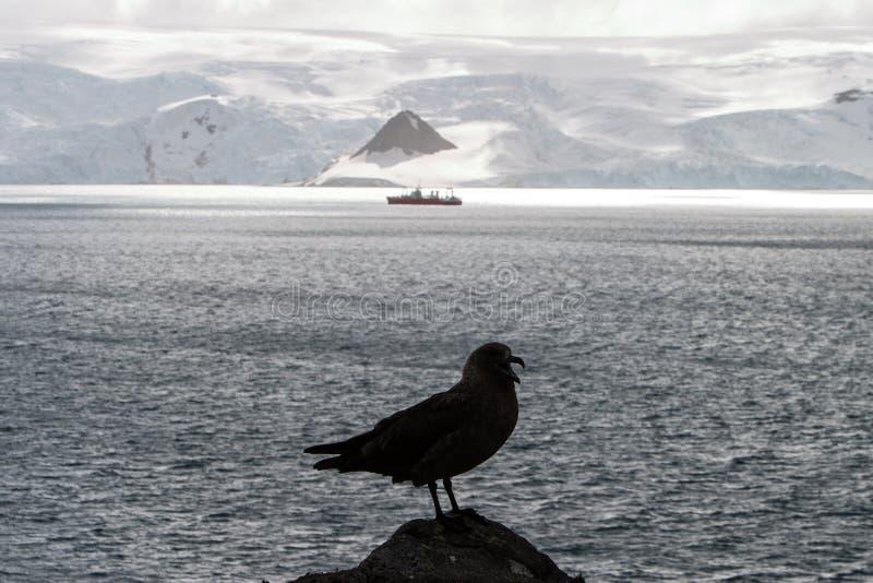 Stercorario e nave in Antartide fotografia stock