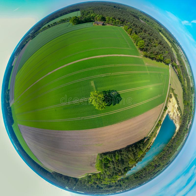 Stereoscopic 360-degree panorama of a single tree in the centre of a field with young green plants, composed of aerial images, royalty free stock photos