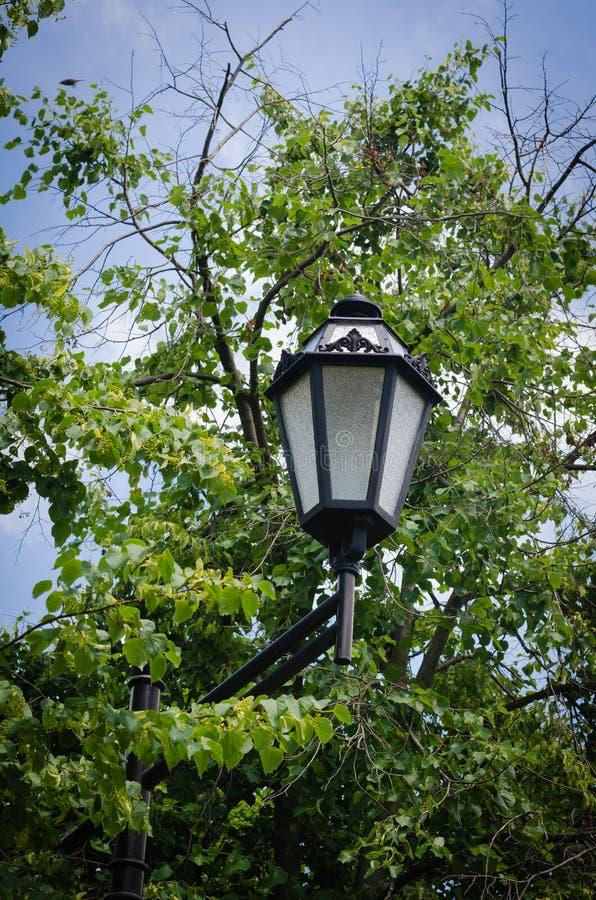 Sterke en vlotte lijnen van een straatlantaarn tegen de hemel en het groene gebladerte van bomen Grace Focus op Voorwerp royalty-vrije stock fotografie
