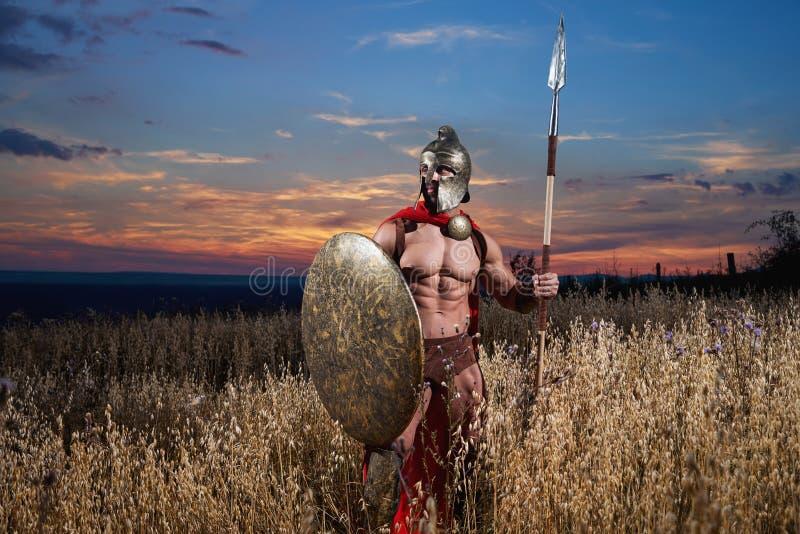 Sterke Spartaanse strijder in veldtenue met een schild en spear stock foto's