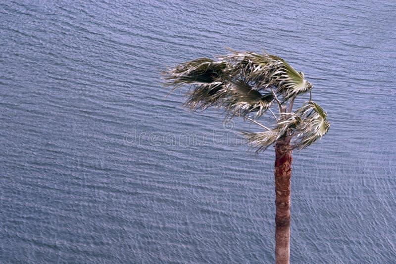 Sterke wind stock afbeeldingen