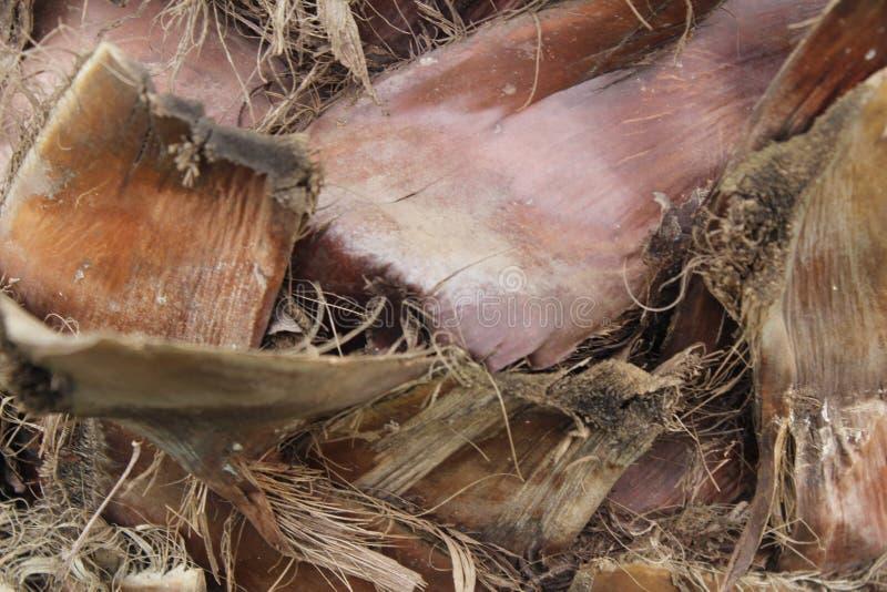 Sterm dell'albero di Plam fotografia stock