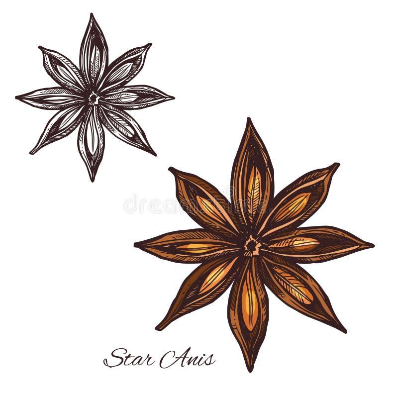 Sternanis-Gewürzskizze der badian Frucht und des Samens stock abbildung