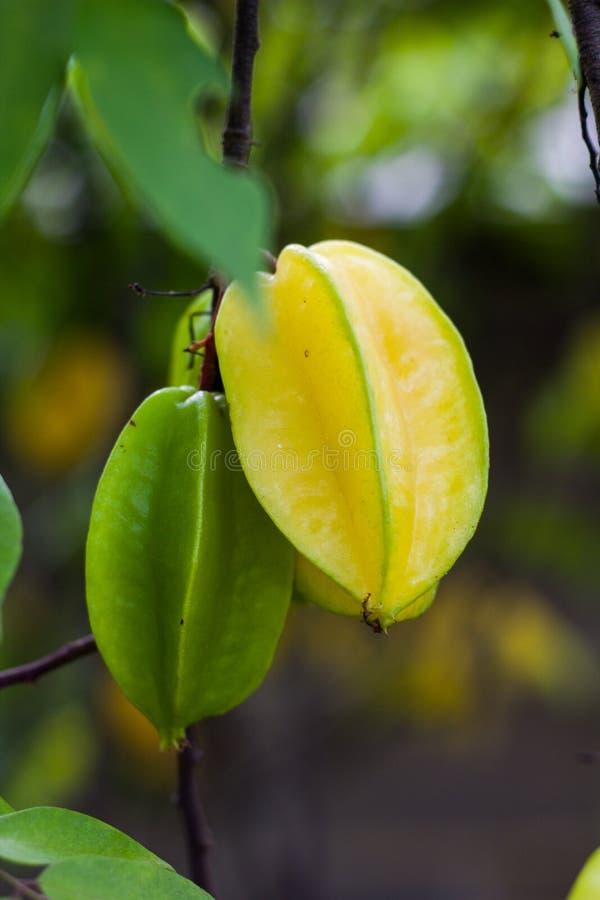 Sternapfelfrucht für gesundes und Vitamin C stockfotografie
