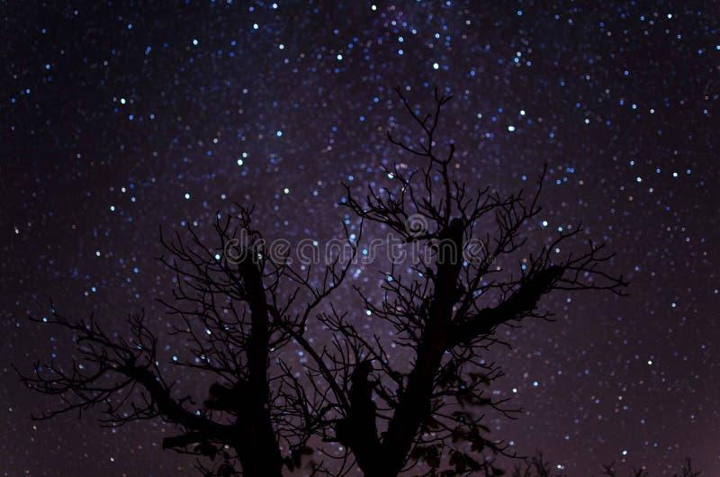 Sternenklare Fallnacht stockbilder