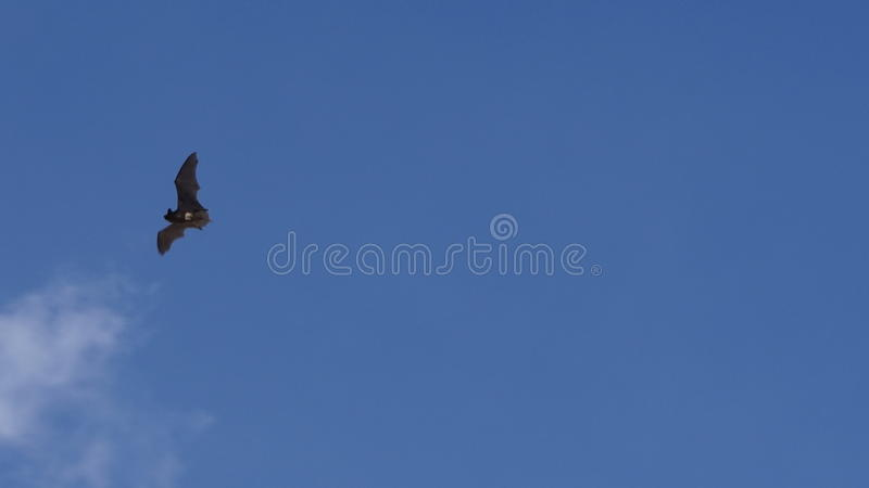 Sternenklarer Himmel und Mond lizenzfreie stockfotos