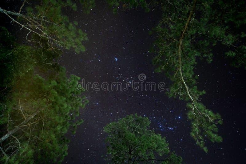 Sternnacht über Kiefernwald stockbilder