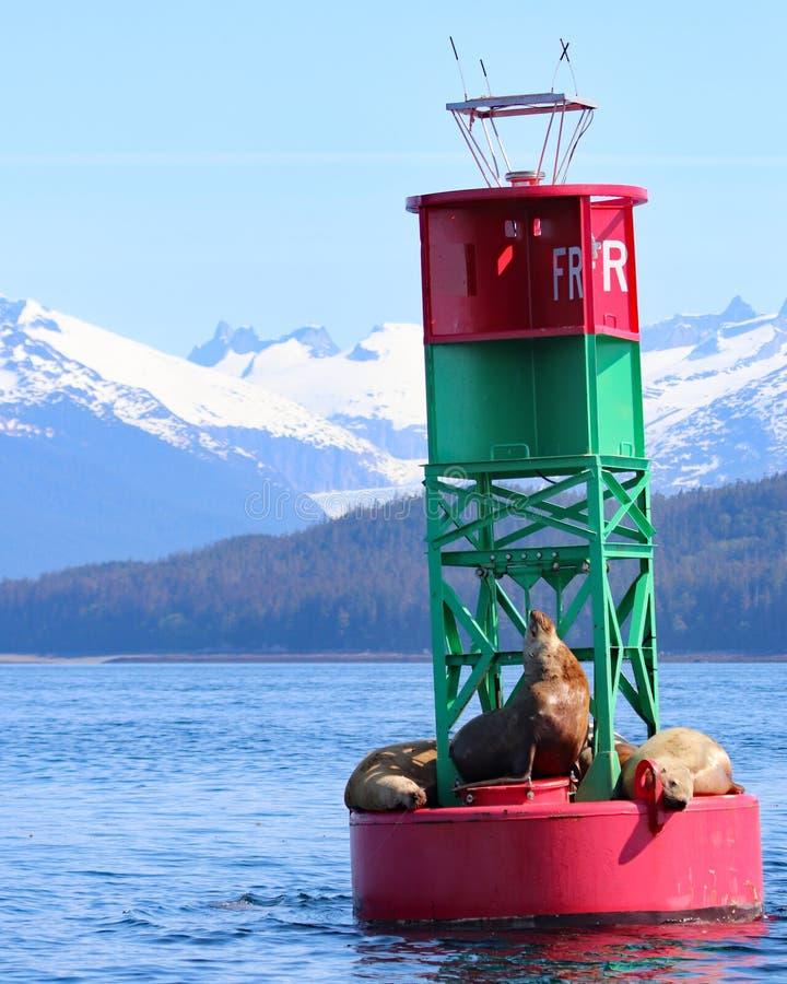 Sternseelöwen auf Boje mit Bergen in Juneau, Alaska stockfoto