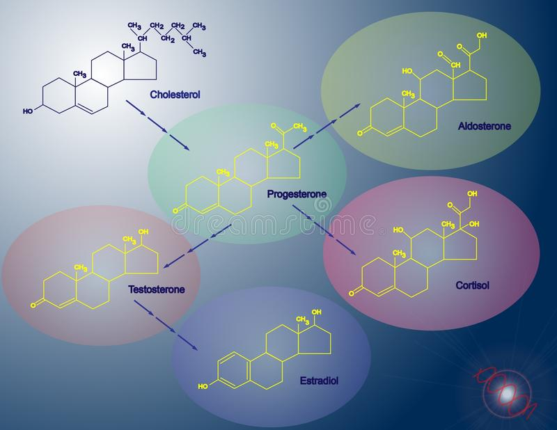 Steroidogenesis stock de ilustración