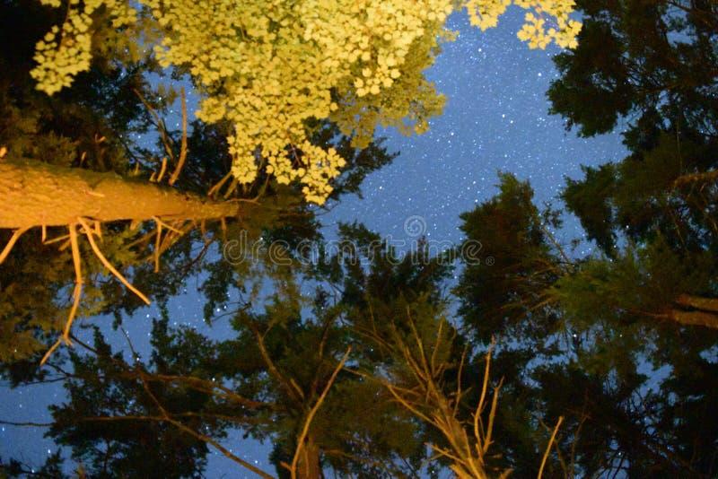 Sterren die door de bomen breken stock afbeelding